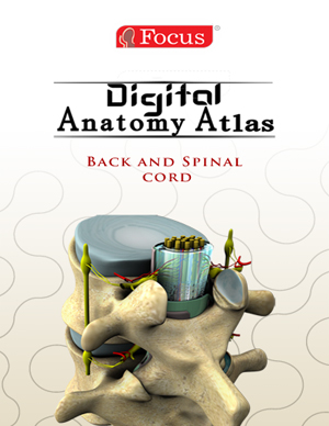Back and Spinal Cord - Digital Anatomy Atlas
