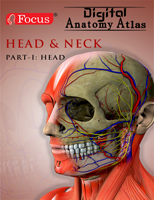 Bentham ebook::Head and Neck - Digital Anatomy Atlas