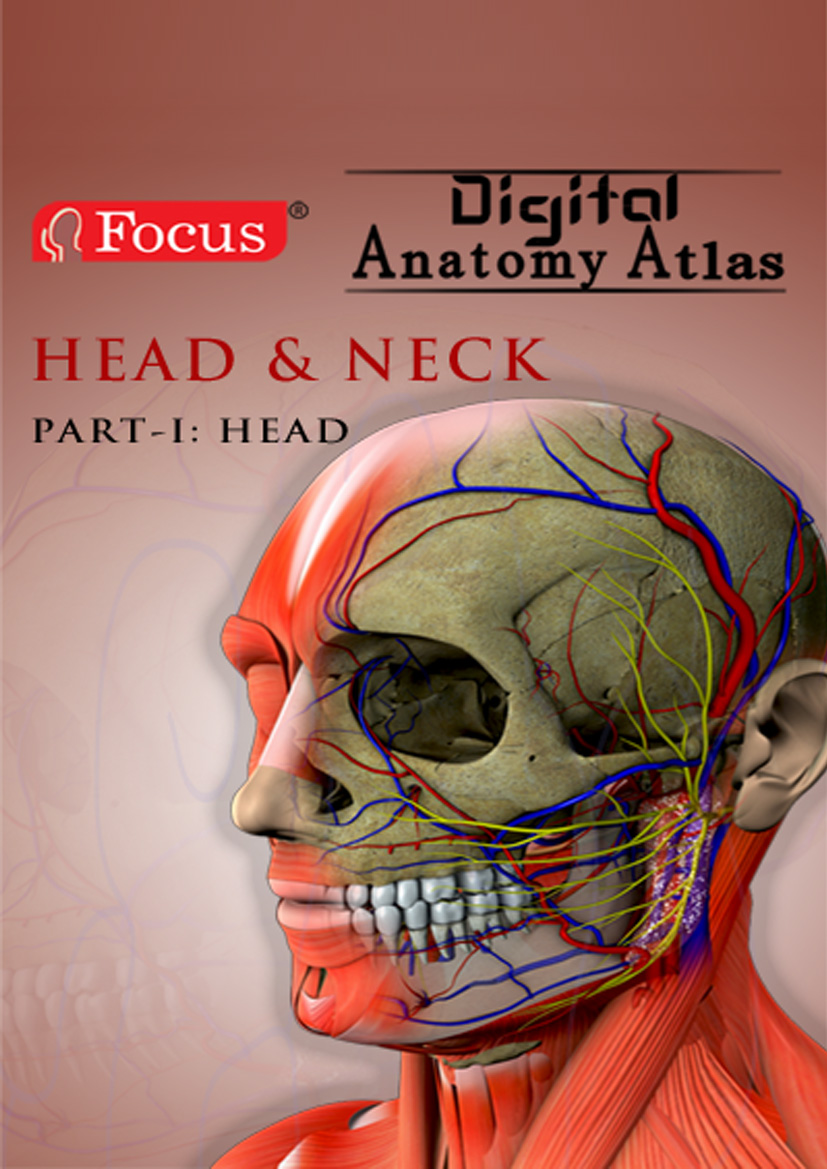 Head and Neck - Digital Anatomy Atlas